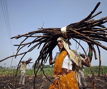 A woman carries a bundle of cut sugarcane on her head as farmers harvest a field outside Gove village in Satara district of Maharashtra