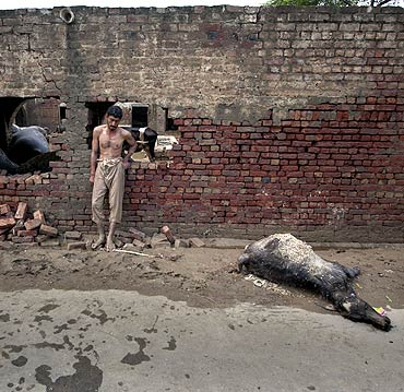 A flood victim returned home to find his livestock killed after waters receded from the 2010 floodwaters in Nowshera, northwest Pakistan.