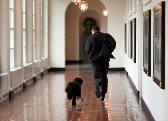 US President Barack Obama runs down the East Colonnade with family dog Bo
