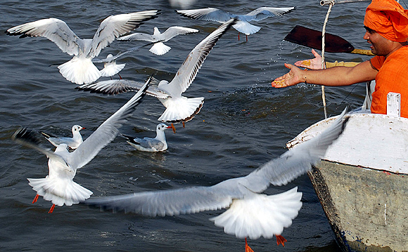 Hindu devotees feed birds at Sangam during Magh Mela festival in Allahabad