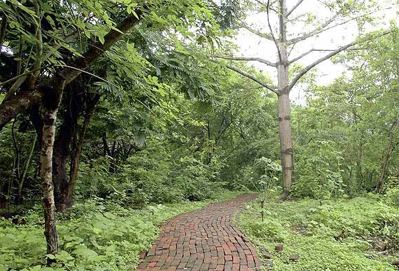 The Mahim Nature Park, from PK Das's book On the Waterfront
