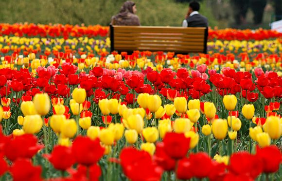The tulip garden in Kashmir has further mesemerised tourists and locals alike