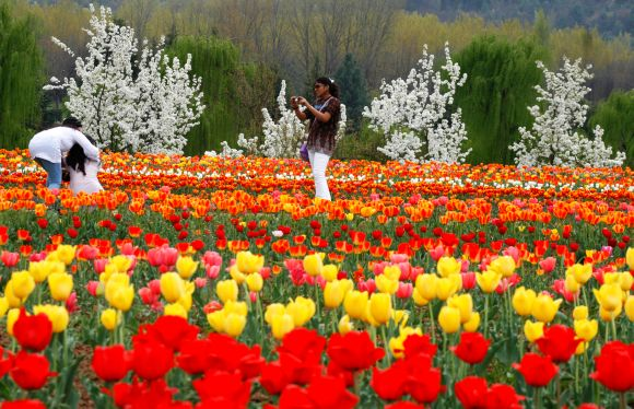 Tulip garden, the latest crowd puller in Kashmir