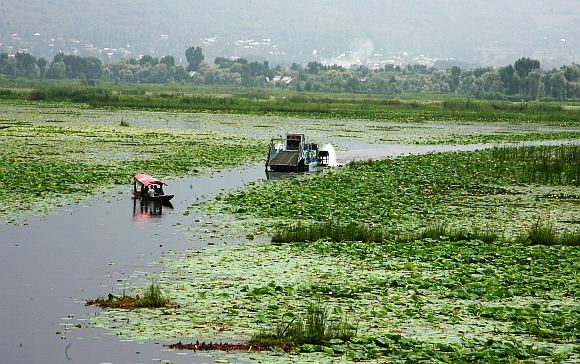 Government labourers clear dead fish with machines at Nigeen Lake
