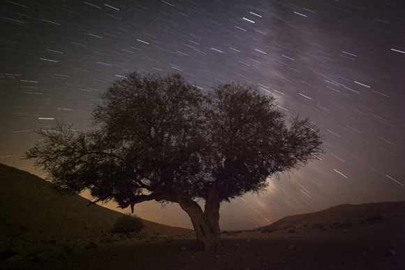 A long exposure shows stars behind a tree during the annual Perseid meteor shower near the southern town of Mitzpe Ramon