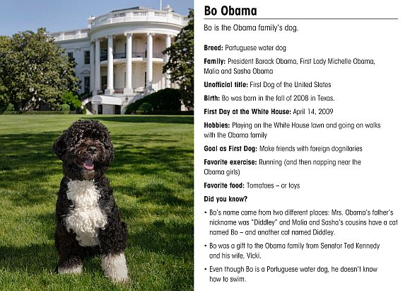 This is the official portrait of the Obama family dog