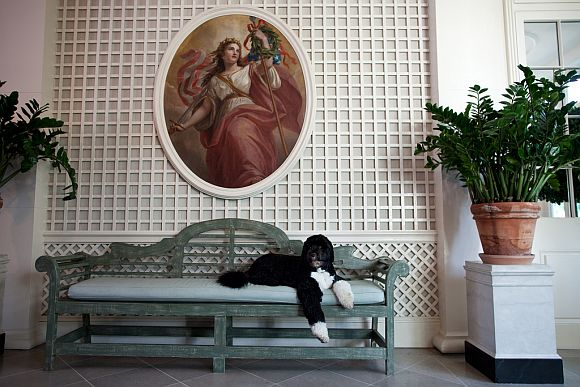 Bo, the Obama family dog, lounges in the West Garden Room of the White House