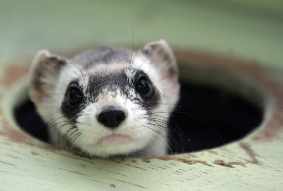 In PIX: They are cute, but endangered too