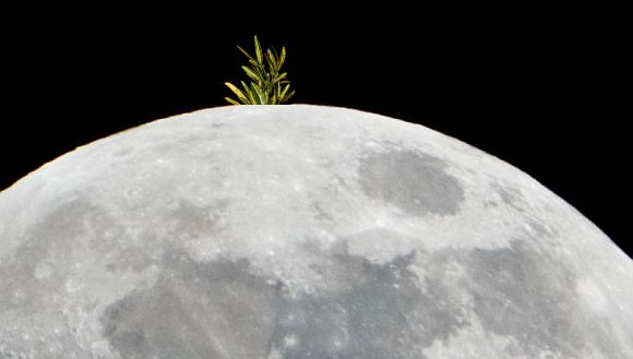 Chinese now plan to grow vegetables on Moon