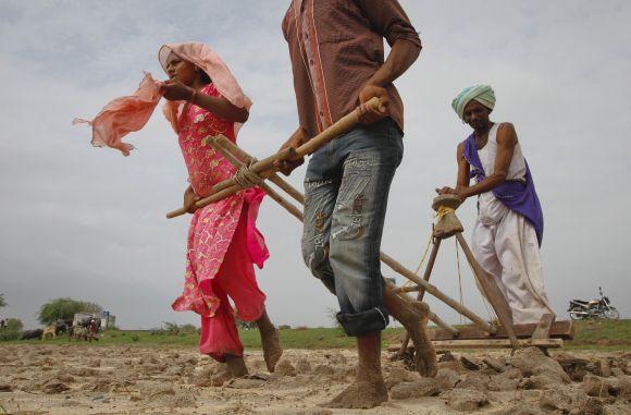 Farmers plough a field before sowing cotton seeds in Kayla village in Gujarat