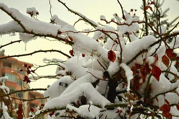 Ankara winters