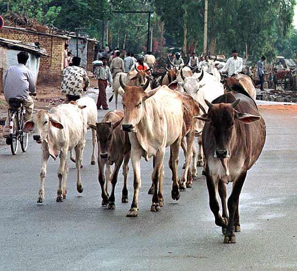 UP poll promises: Laptops, jobs, cows and Ram Mandir