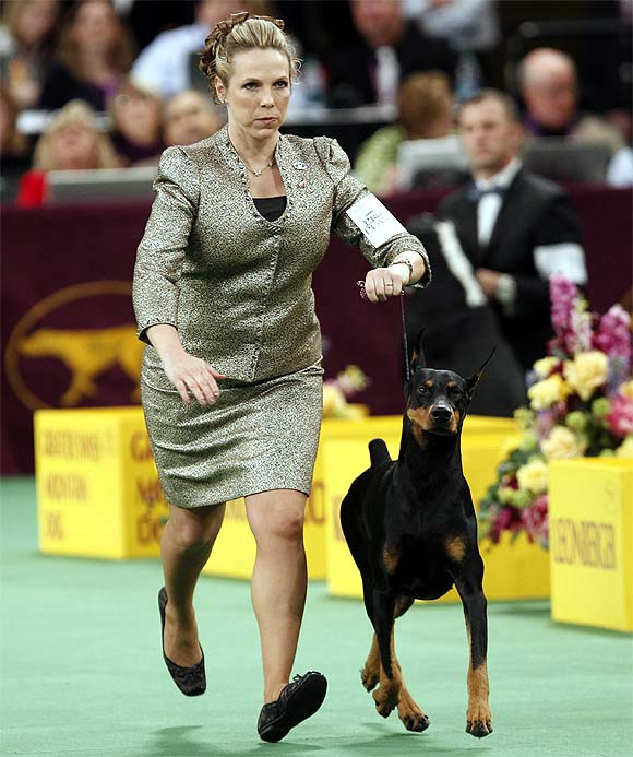 Protocol's Veni Vidi Vici, a Doberman Pinscher, is seen with his handler while winning the Working Group