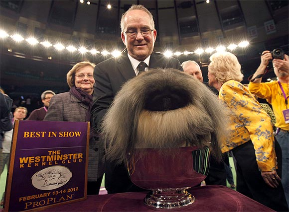 Handler David Fitzpatrick places Malachy, a Pekingese, into the silver bowl after he won Best In Show