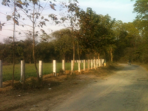 The Rehmankhera forest