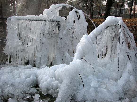 Icicles hang from a tree