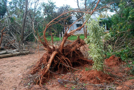 Auroville saw widespread destruction due to Cyclone Thane. Fortunately no lives were lost
