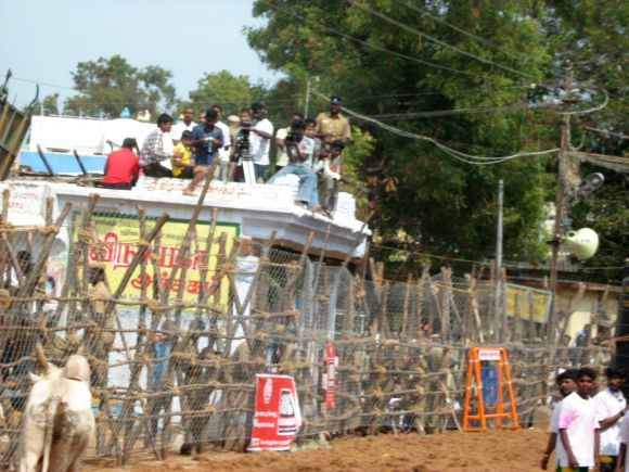 Photographers and camera crew cover the Jallikattu