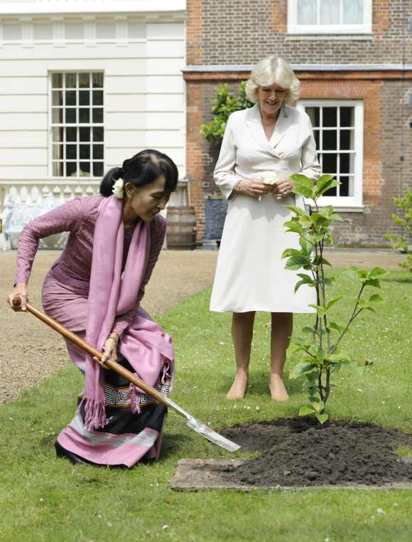 Suu Kyi plants a Magnolia tree in the gardens of Clarence House in central London
