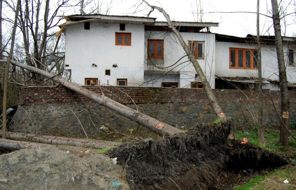 A tree uprooted by the windstorm is seen near a residential building in Srinagar