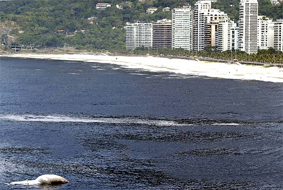 Great white whale shocks surfers at Rio beach
