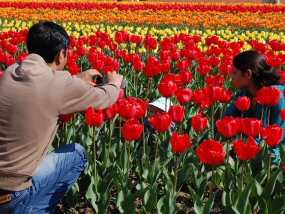 PHOTOS: A flowery delight at Srinagar tulip garden