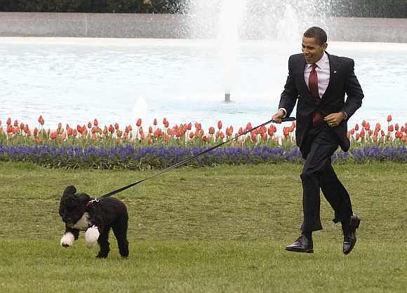 Obama plasy with the first family's dog, Bo, at the White House