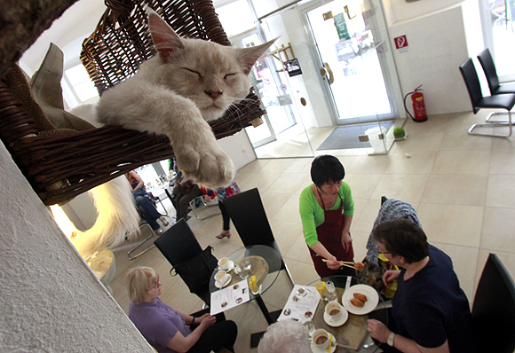 First Oz cat cafe, 'super cool bra' and more
