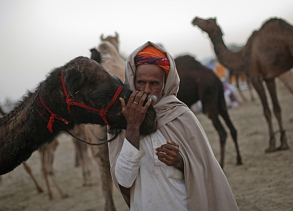 World's LARGEST camel fair in Pushkar