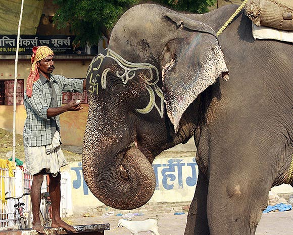 Raju the elephant, gets his make-up done before setting out for the day