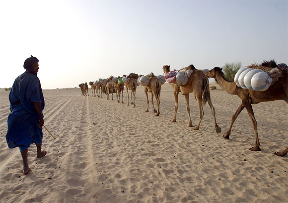 A camel caravan leaves Timbuktu in Mali