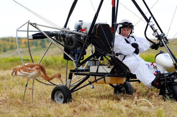 Russian President Vladimir Putin looks at a crane as he sits in a motorised deltaplane