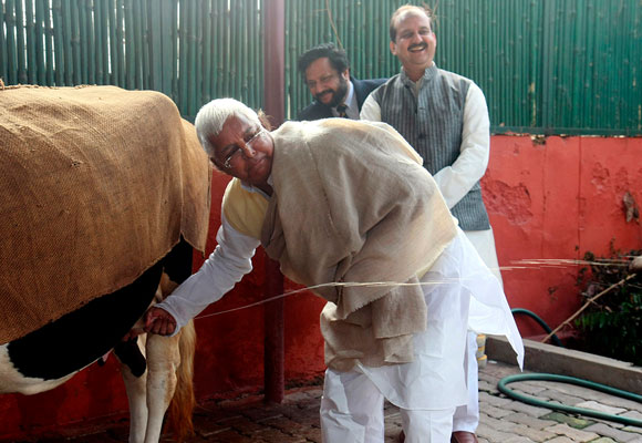 Former Bihar chief minister Lalu Prasad Yadav milks a cow at his home in Delhi