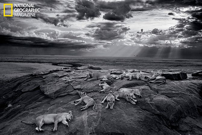 In PHOTOS: The majestic Serengeti lion