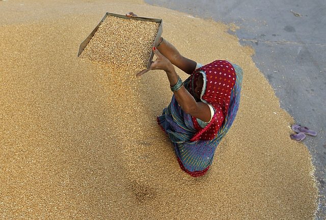 A woman winnows wheat crop at a wholesale grain market on the outskirts of the western Indian city of Ahmedabad