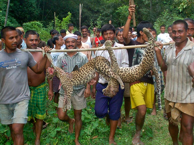 Villagers carry the bodies of two leopard cubs beaten to death -- because they were seen in a village --  in Sivasagar district, Assam, September 29, 2012.