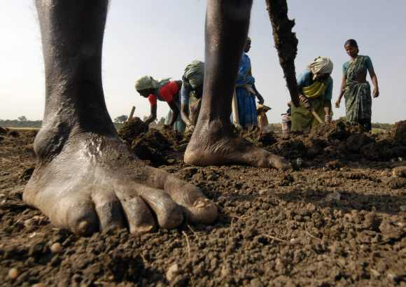 Labourers work on a dried lake to try and revive it under the National Rural Employment Guarantee Act