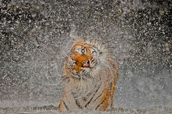 MUST SEE! Winning photographs of 2012 Nat Geo contest