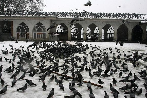 IN PICS: Heavy snowfall shuts down Kashmir
