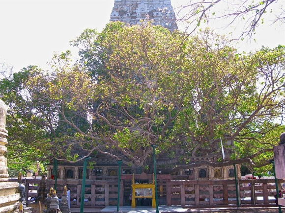 The Bodh Gaya temple premises