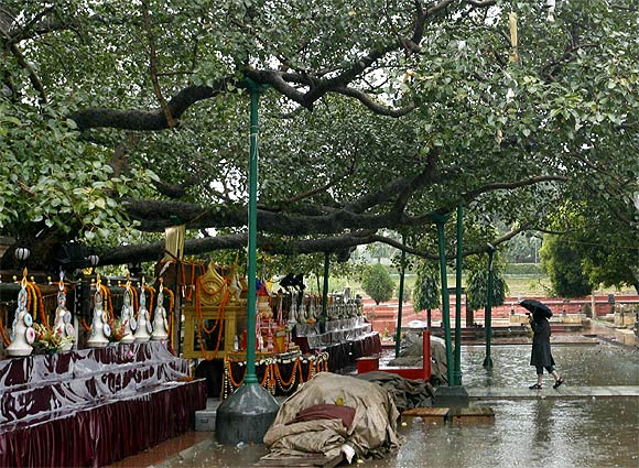 A pilgrim walks under Lord Buddha's holy tree at the Mahabodhi temple compound