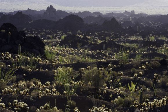 Pinacate volcanics biosphere reserve