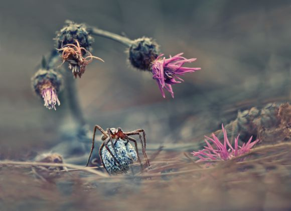 Welcome to the world of the spider