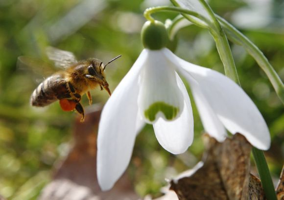 PHOTOS: Welcoming SPRING after a chilly winter