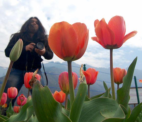 Inside Kashmir's breathtaking tulip garden