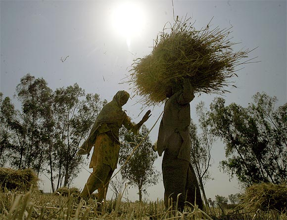 Farming, the mainstay of Punjabi families for ages, no longer attracts the young