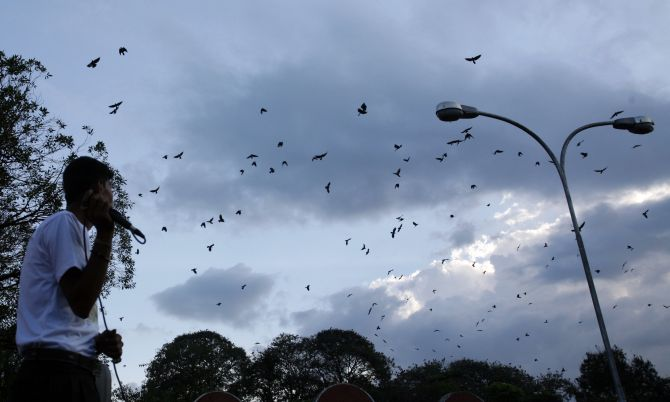 Crows flock around as Gautam Sapkota, a self-proclaimed 'crow caller', produces bird sounds to attract them, in Kathmandu