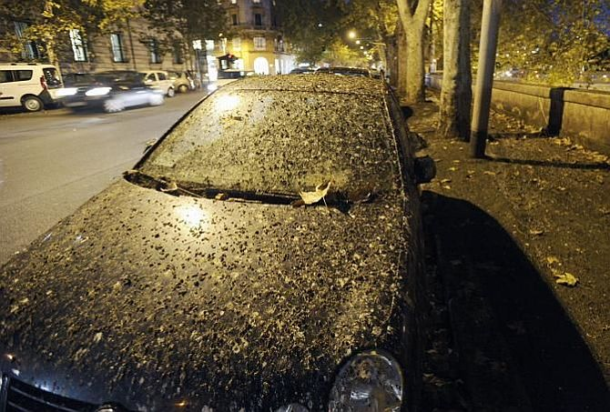 It's raining poo in Rome