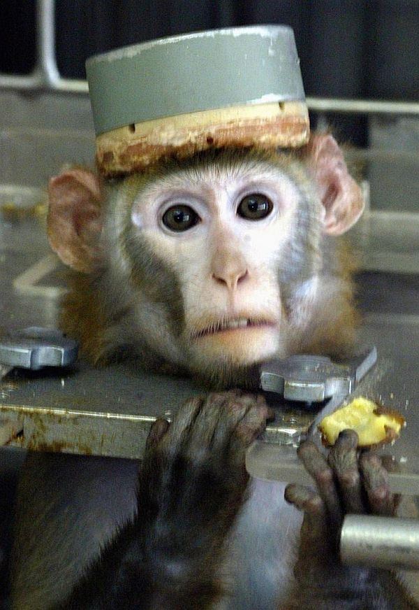 Iran's sending another monkey into space