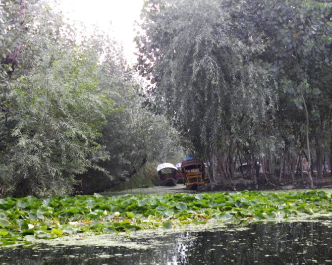 Riding a shikara through the network of canals that make up Dal Lake